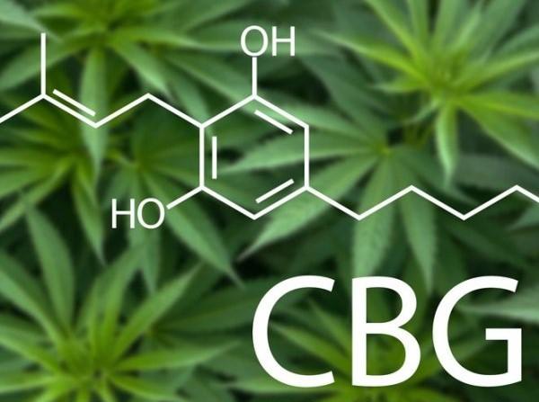 Čo je to CBG? | Cannilav